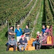 Die Saffergärtler Weinbauern haben allen Grund zur Freude: Die diesjährigen Trauben sind gelesen. (Bild: Nadia Schärli, 8. Oktober 2019)