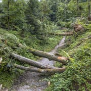 Im Bireggwald in der Nähe des Vita Parcours sind mehrere Bäume entwurzelt worden. (Bilder: Pius Amrein, Horw, 8. Juli 2019)