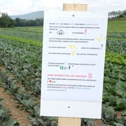 Das Schild richtet sich an potenzielle Diebe, die es auf Gemüse abgesehen haben. (Bild: Philipp Stutz)