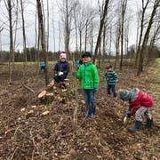 Da ist ein gerütteltes Mass an Manneskraft und Frauenpower gefragt: Von Hand werden 150 Jungeichen und Kirschbäume in den Waldboden gepflanzt. (Bilder: Andrea Häusler)