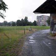 Im Gebiet Röhrliberg beim Allmendhof in Cham soll dereinst die Kantonsschule Ennetsee entstehen. Bild Werner Schelbert (6. Juli 2018)