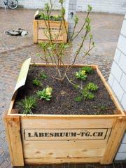 Die Biodiversitätsboxen in Münchwilen. (Bild: Larissa Flammer)