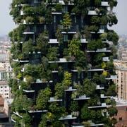 Begrünte Fassaden wie bei der Siedlung Bosco Verticale in Mailand können ein Mittel gegen Hitze sein. (Bild: Luca Bruno/AP)