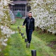 Der Baarer Bauer Philipp Hotz musste seine Chriesibäume in gewissen Nächten mit Frostkerzen warmhalten. (Bild: Stefan Kaiser, Baar, 16. April 2019)