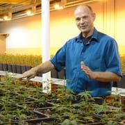 Geschäftsleitungsmitglied Peter Külling in der Indoor-Produktionsanlage auf dem Interpars-Areal in Schönenberg. (Bild: Georg Stelzner)