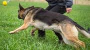 Die Haltung von Hunden verlangt viel Wissen, Zeit und Zuneigung.(Symbolbild: Andrea Stalder)