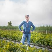 Biowinzer Roland Lenz steht in den ersten eigenen Jungreben. (Bild: Thi My Lien Nguyen)