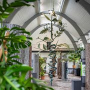 Blick in die Ausstellung über Kletterpflanzen in der Orangerie des Botanischen Gartens St.Gallen. (Bild: Urs Bucher - 28. Mai 2019)