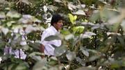Evo Morales peilt eine weitere Amtszeit als bolivianischer Präsident an. (Bild: AP)