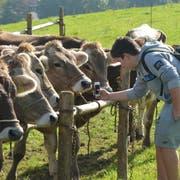 An den Viehschauen werden die Kühe begutachtet. (Bild: APZ)