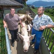 Eine Luftaufnahme des Schweinestall von Kaspar Hofer mit dem vorgelagerten Freilauf für die Schweine mit den im Hintergrund angrenzenden Privat-Grundstücken. (Bild: Pius Amrein, Meggen, 17. Juni 2019)