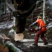 Ein Forstwart bei der Arbeit in Unterägeri. (Bild: Stefan Kaiser, 16. Februar 2016)