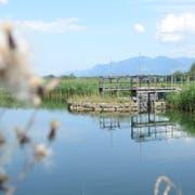Der Zweckverband Rheintaler Binnenkanal saniert den Steinenbachsämmler in Sennwald. (Bilder: Corinne Hanselmann)