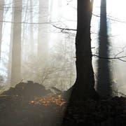 Der Mann wurde in einem Waldstück bei Aadorf gefunden. (Symbolbild: Donato Caspari)