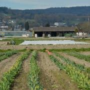 Im Tägermoos auf Schweizer Staatsgebiet betreiben Deutsche Landwirtschaft. (Bild: Donato Caspari, 12. April 2018)