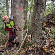 Der Mann wurde bei Waldarbeiten von einem Baum tödlich getroffen. (Symboldbild: Urs Bucher)
