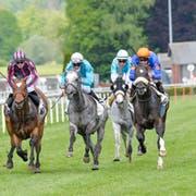 Im GP Turf Club sind alle Pferde bei beieinander. «Bimini Twist» (Zweiter von rechts) gewinnt gegen Schimmel «Vardak »(Mitte). (Bild: Donato Caspari)