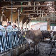 Agroscope in Tänikon präsentiert aktuelle Forschungsprojekte zum Weidemanagement. (Bild: Andrea Stalder)