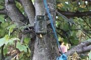 Die Kamera am Baum sollte die Täter entlarven. (Bild: Susi Miara)