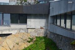 Fast wie bestellt: Die erste Steinbockgeiss empfängt uns direkt bei der Panoramagalerie. (Bild: Andrea Hofstetter)