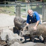 Walter Mauerhofer mit seinen Wildschweinen Franky und Charlotte. (Bild: Reto Martin)