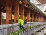 Ein Mitarbeiter der Stadtgärtnerei kümmert sich um den Blumenschmuck auf der Kapellbrücke. (Bild: LTAG / Laila Bosco)