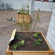 Biodiversitätsboxen vor dem Münchwiler Gemeindehaus. (Bild: Larissa Flammer, 9. April 2019)