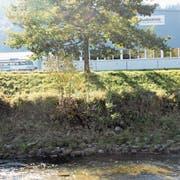 An zwei Stellen in Wattwil ist die heutige Verbauung der Thur desolat, zum Beispiel im Bereich des Busdepots. (Bild: Martin Knoepfel)