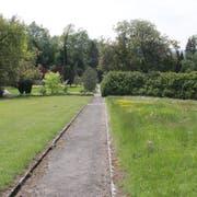 Ein ungewohnter Anblick: Die Wiese (rechts) auf dem Friedhof in Rorschach-Rorschacherberg mit heimischen Wildblumen. (Bild: Ines Biedenkapp)