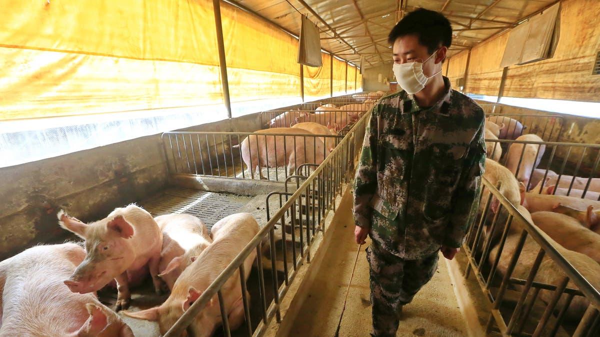 China Virus Schweinegrippe