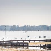 Der Untersee (im Bild beim Ermatinger Horn) ist ein beliebtes Überwinterungsgebiet für Zugvögel. (Bild: Andrea Stalder)