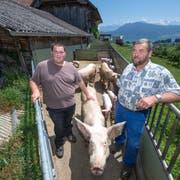 Dieser Schweinestall der Bio-Bauern Kaspar (rechts) und Balthasar Hofer muss weg. (Bild: Pius Amrein, 17. Juni 2019)