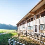 Stall des Anstosses: In diesem landwirtschaftlichen Gebäude hält Bauer A. Z. maximal 588 Schafe. (Bild: Andrea Stalder)