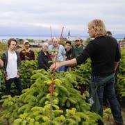 Der Goldacher Sepp Germann (Zweiter von links) ist einer der grössten Christbaumproduzenten in der Region Rorschach. (Bild: Jolanda Riedener)