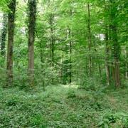 Auf 4200 Hektaren wachsen im Forst Repaš die beliebten Eichen. (Bilder: Stefan Borkert)