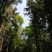 Ein Ungleichgewicht: Viele nutzen den Wald, doch die Pflege ist in den Händen von Wenigen.(Bild: PD)