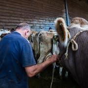 Auf dem Schlachtviehmarkt in Wattwil verkaufen Bauern ihre Tiere. (Bild: Raphael Rohner)