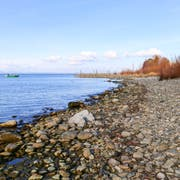 Die Revitalisierung in Staad ist Beispiel dafür, wie Seeufer ohne steile Mauer-Elemente gestaltet werden können. (Bild: Rudolf Hirtl)