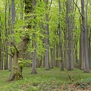 Ein Wald ist viel mehr als ein Naherholungsgebiet. Er kann die Treibhausgase kompensieren.