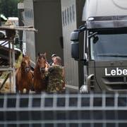 August 2017: Die Armee transportiert die Pferde vom Hof in Hefenhofen ab. (Bild: Manuel Nagel)