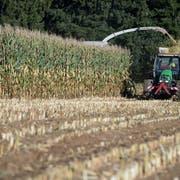 Bauern sollen umweltfreundlicher produzieren. (Bild: Nadia Schärli, Willisau, 5. Oktober 2017)