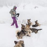 Ans Wandern denken wohl die wenigsten - ausser man ist mit Schneeschuhen unterwegs. (Bild: Nadia Schärli (Andermatt, 14. Januar 2019))