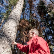 Bruno Röösli, Abteilungsleiter Wald beim Kanton Luzern, vor einer Fichte mit Borkenkäferbefall. (Bild: Nadia Schärli, Rain, 22. März 2019)