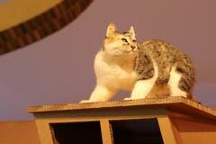 Speziell für ihren St.Galler Auftritt wurde die Ausstellung «Grimms Tierleben» mit einem Hexenhaus ergänzt. Auf dessen Dach thront eine speziell gefärbte Katze. Im Innern gibt es eine Lese-, eine Verkleidungs- und eine Kuschelecke.