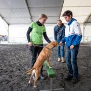 Hundetrainerin Claudia Bielmann und ihr Hund Chicco mit Hugo Bischof, Autor dieses Artikels, und seinem Sohn Jim in der Luga-Arena. Bild: Roger Grütter (Luzern, 29. April 2019)