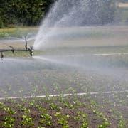 Wasser ist der Treibstoff der Landwirtschaft: Hier wird eine Kultur bewässert. (Bild: Donato Caspari)