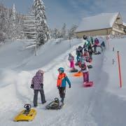 Schülerinnen und Schüler aus Goldach steigen mit Schlitten und Helm den Berg oberhalb von Heiden hoch. (Bild: Christof Sonderegger)