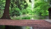 Der Sägeweiher in der Gemeinde Roggwil ist idyllisch gelegen. Bild: Max Eichenberger