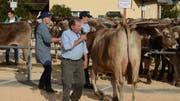 Mathias Eggenberger führte als Speaker durch das Programm der letzten Viehschau der Saison. (Bild: Jessica Nigg)