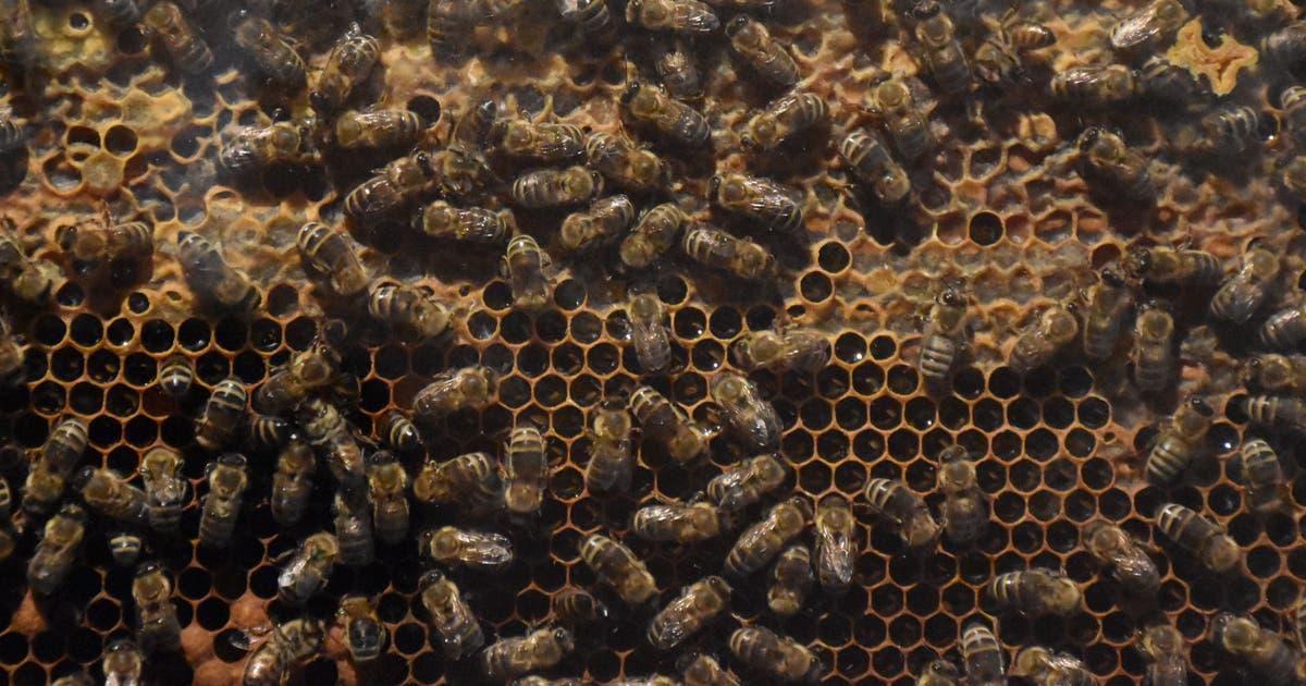 Illegale Substanz tötet Hunderttausende Bienen | St.Galler Tagblatt